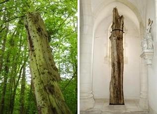 arbre martyr fey en haye